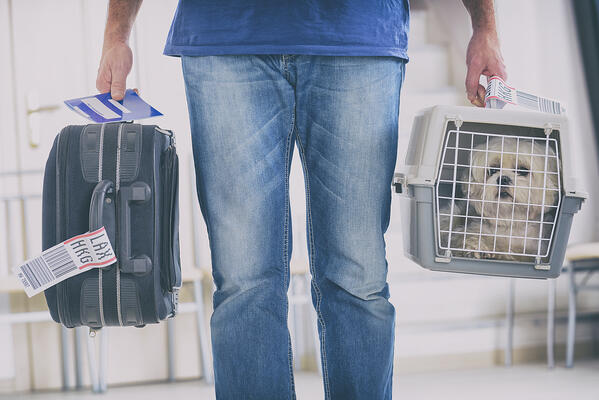 pet carrier dog travel